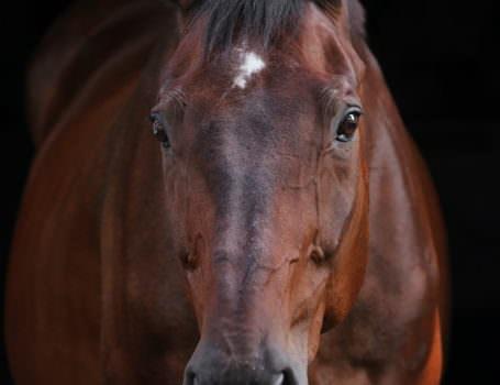 pferdefotografie-08