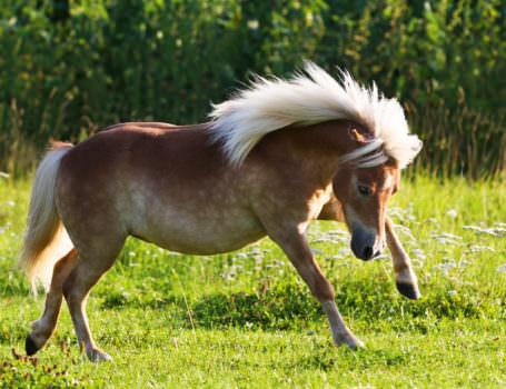 pferdefotografie-100