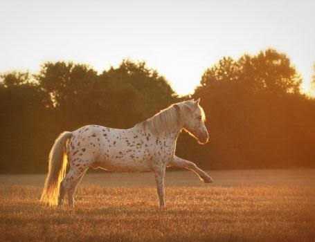 pferdefotografie-17