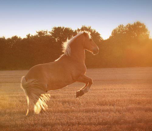 pferdefotografie-103